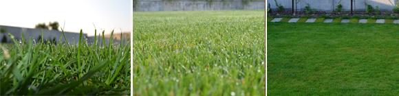 grass_magis